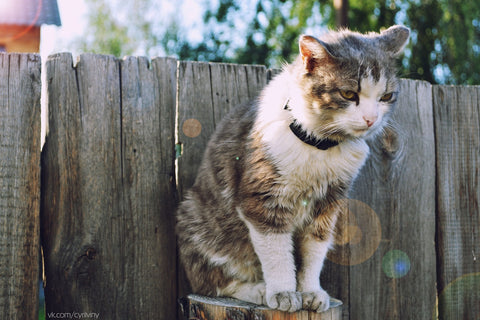 cat standing up high on a fence