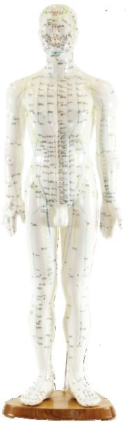 Human Acupuncture Model, 20