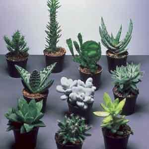 Succulents Indoors - Geoponics Inc