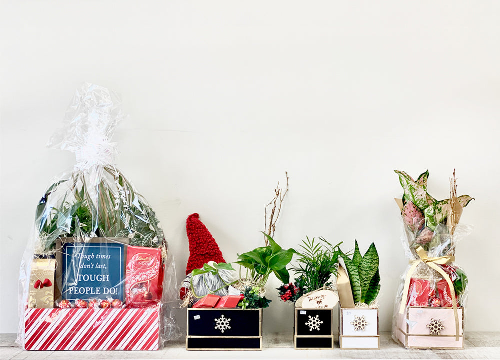 Plant Club Corporate Gifting