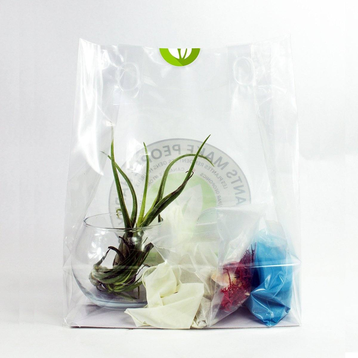 Air Plant Kit - Geoponics Inc