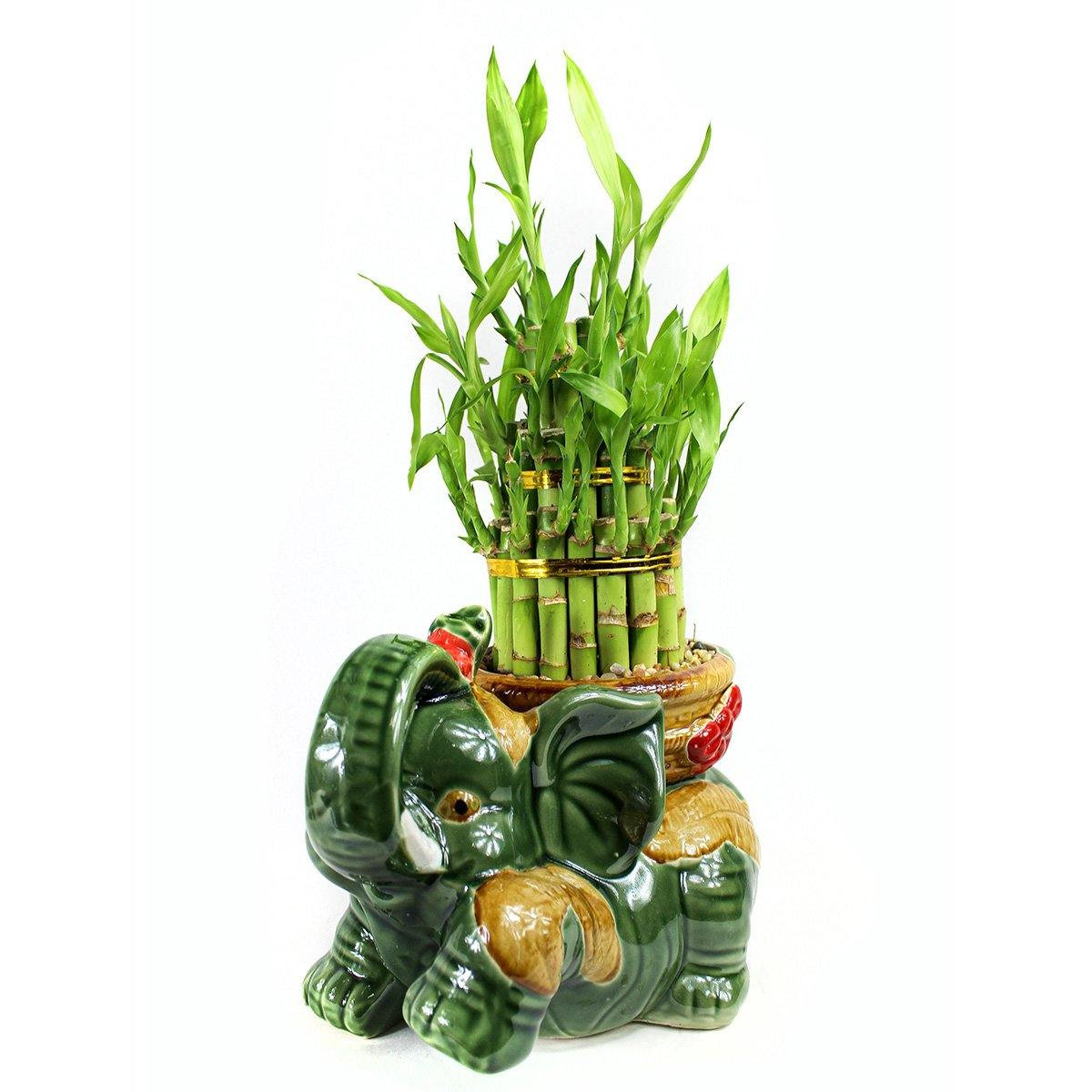 Large Elephant Bamboo Kit - Geoponics Inc