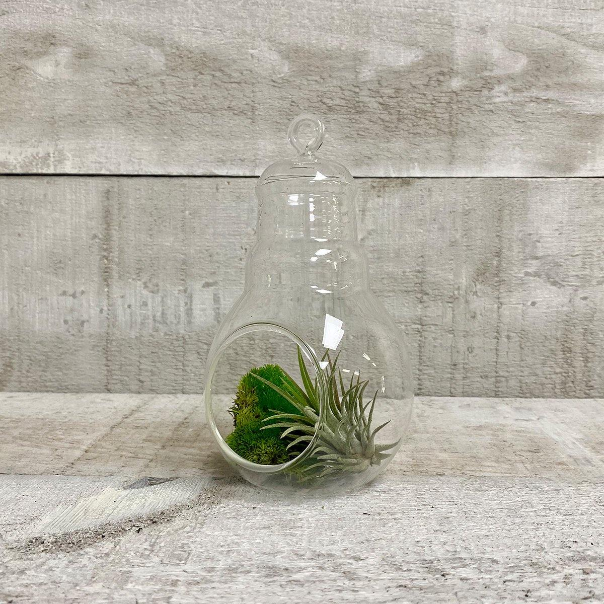 "6"" Glass Bulb Vase - Geoponics Inc"