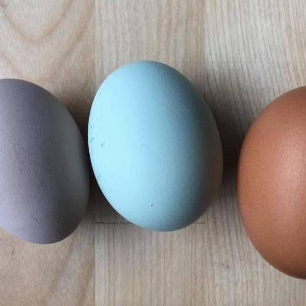 Pastured Eggs **Inventory will be updated Daily**
