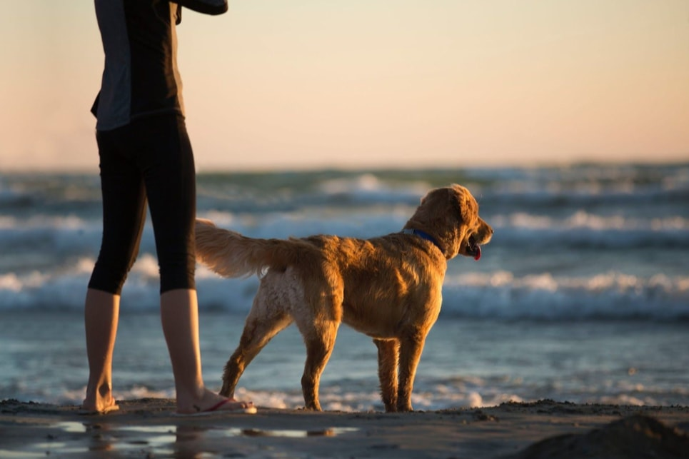 6 REASONS TO TAKE YOUR DOG ON VACATION