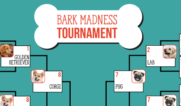 BARK MADNESS FINAL FOUR RECAP AND CHAMPIONSHIP PREVIEW