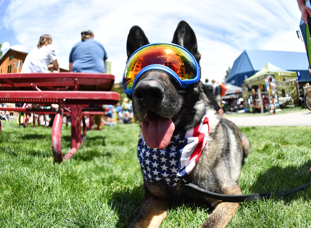 Dog Friendly Festivals and Events: Southeast Edition