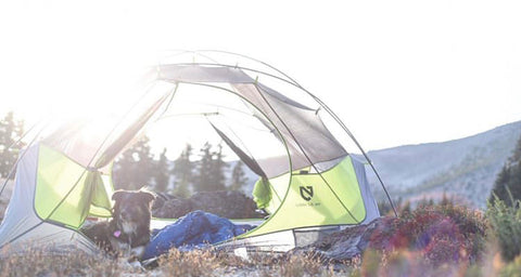 dog camping in tent