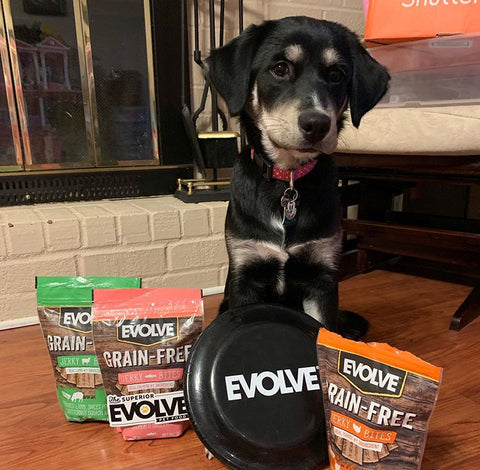 dog posing with evolve products