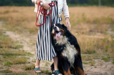dog leaning against woman in a grassy field