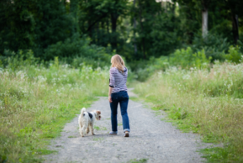 dog following woman in a field