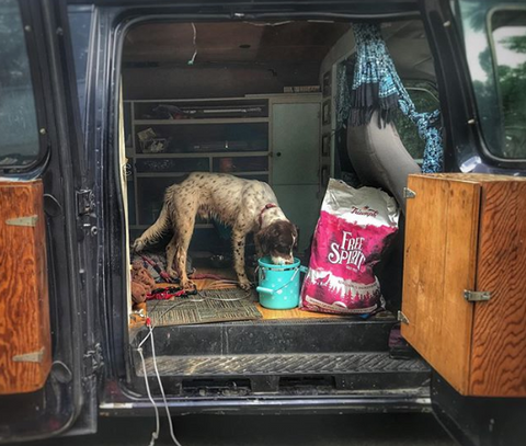 Dog eating Triumph Pet Food in van
