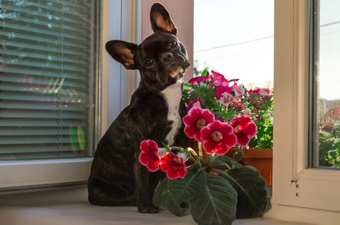 pup and pink flowers