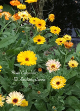 Load image into Gallery viewer, Calendula Mix