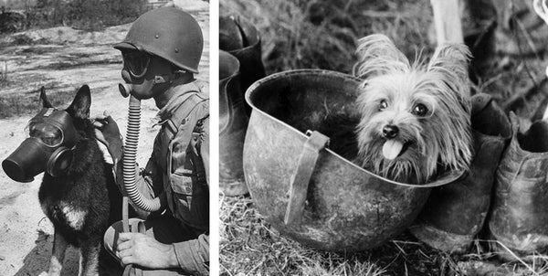 5 interesting facts about War Woof Heroes
