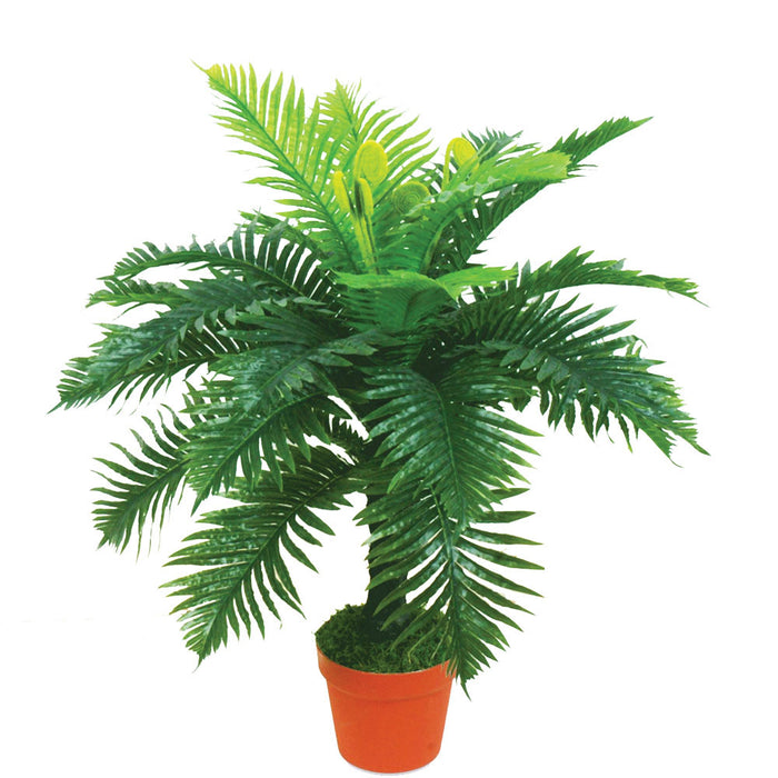 Classic Jungle Fern Plant