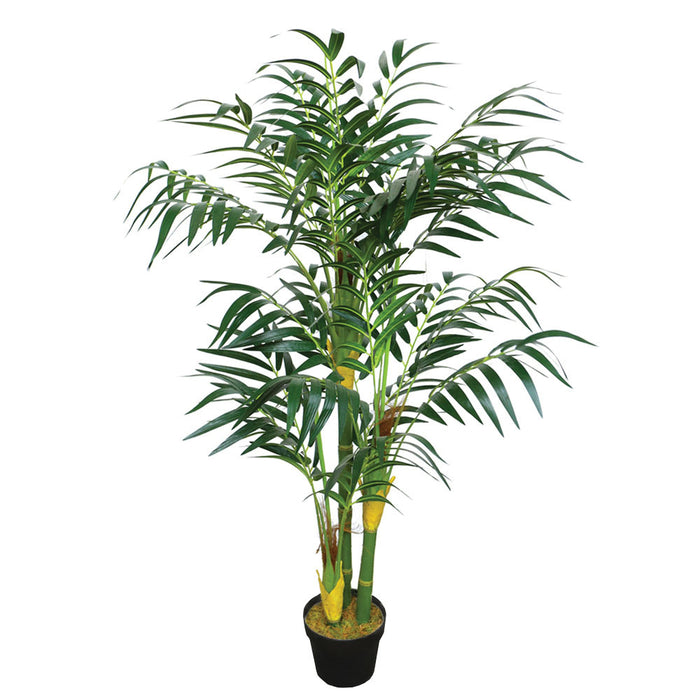 Amazon Areca Bamboo Palm