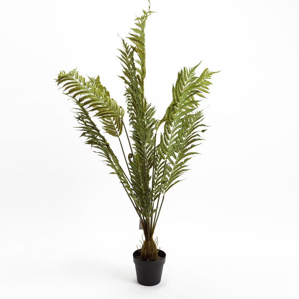 Large Fern Tree