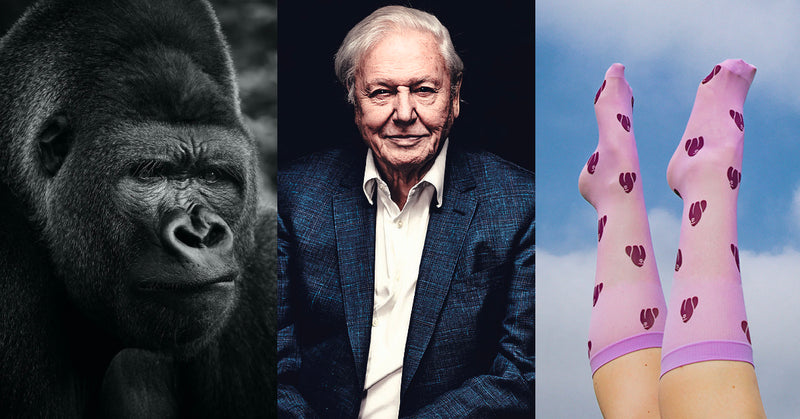 One Planet Only – Our tribute to Sir David Attenborough