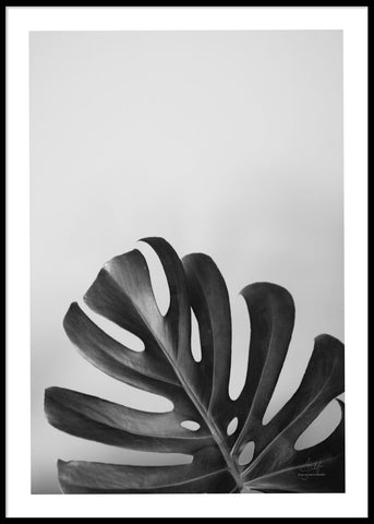 MONSTERA B&W POSTER