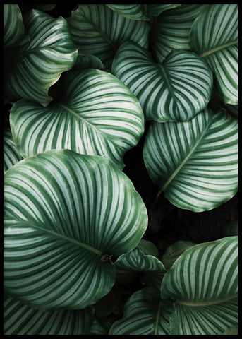 BIG GREEN LEAVES POSTER