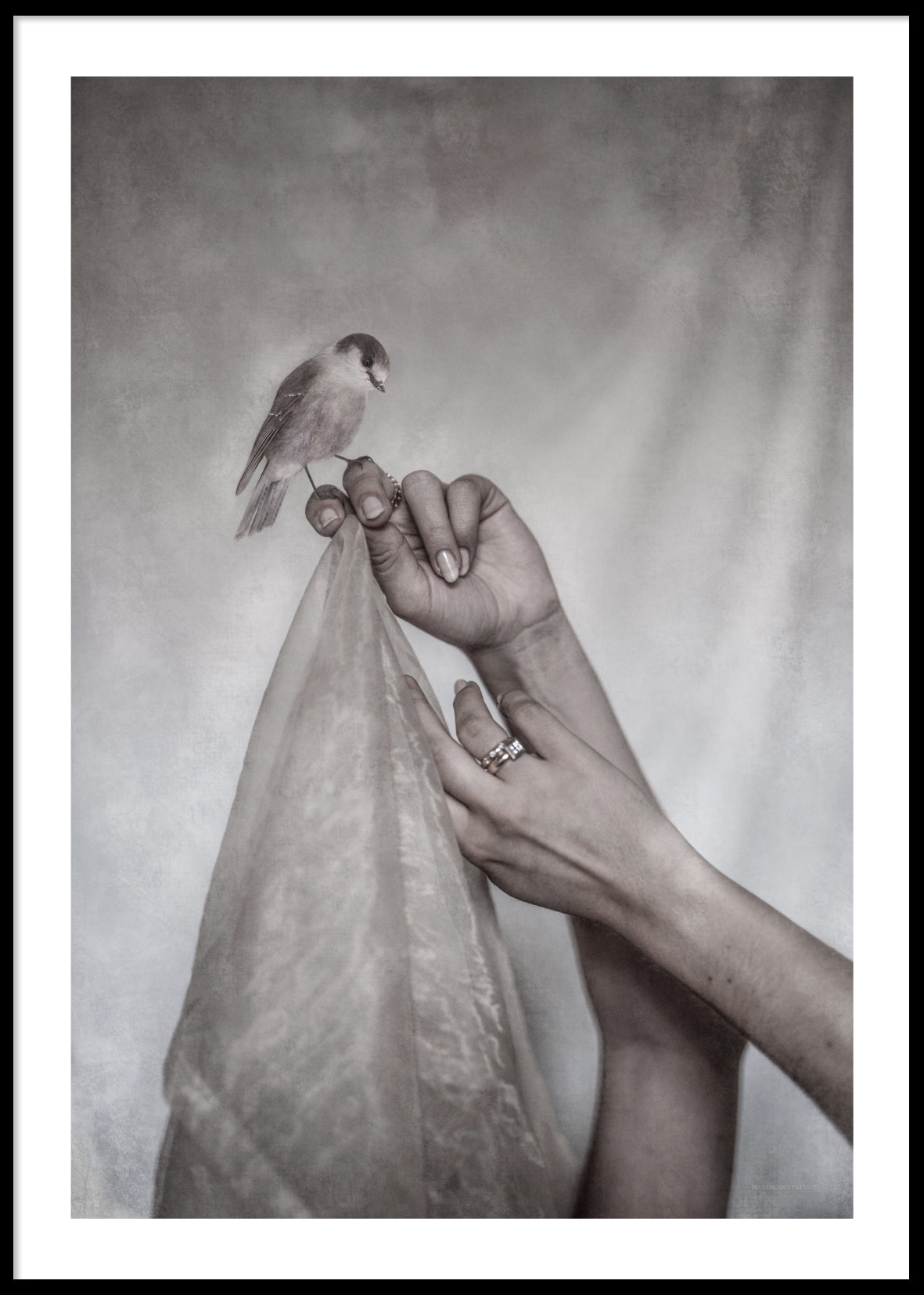 A BIRD AND TWO HANDS POSTER