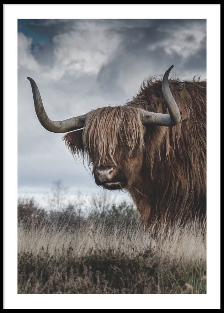 HIGHLAND CATTLE #4 POSTER
