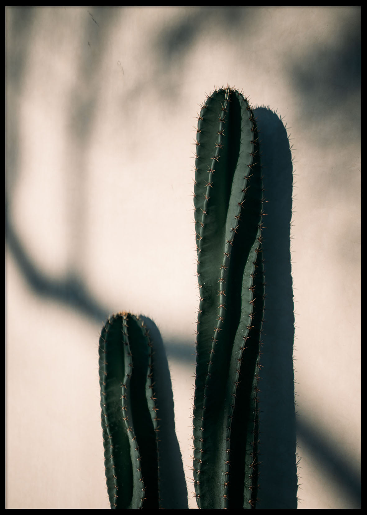 CACTUS AFTERNOON LIGHT POSTER