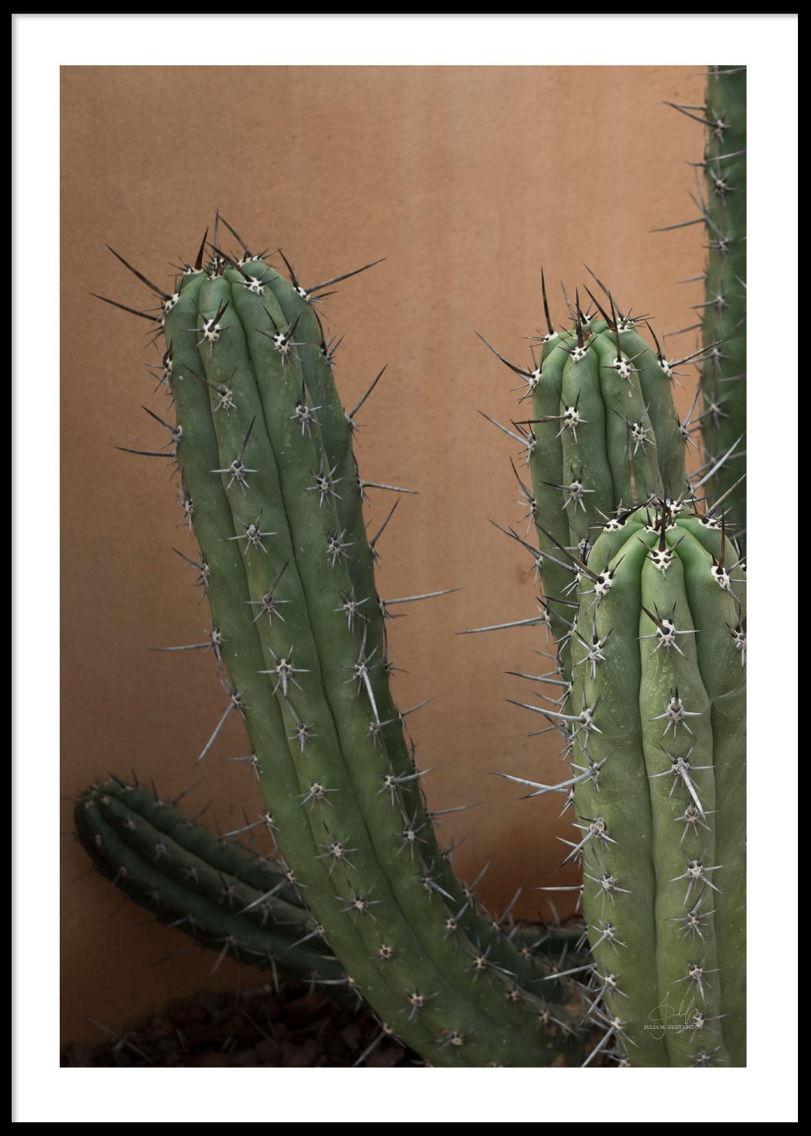 CACTUS CLOSE UP SPAIN POSTER