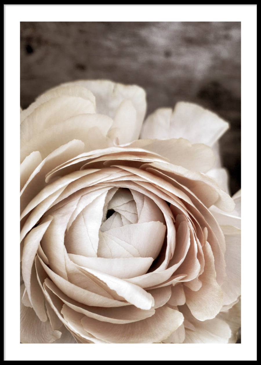 CREAM WHITE FLOWER POSTER