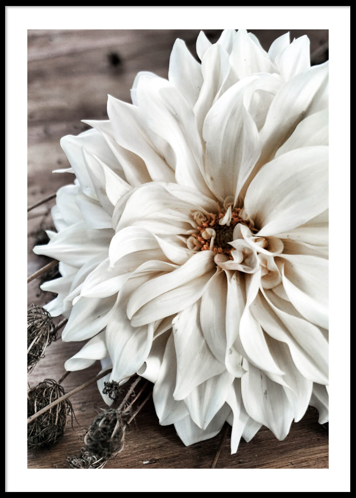 BIG WHITE FLOWER POSTER