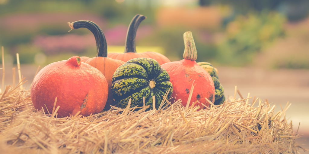 9 things to do with Pumpkins this Fall