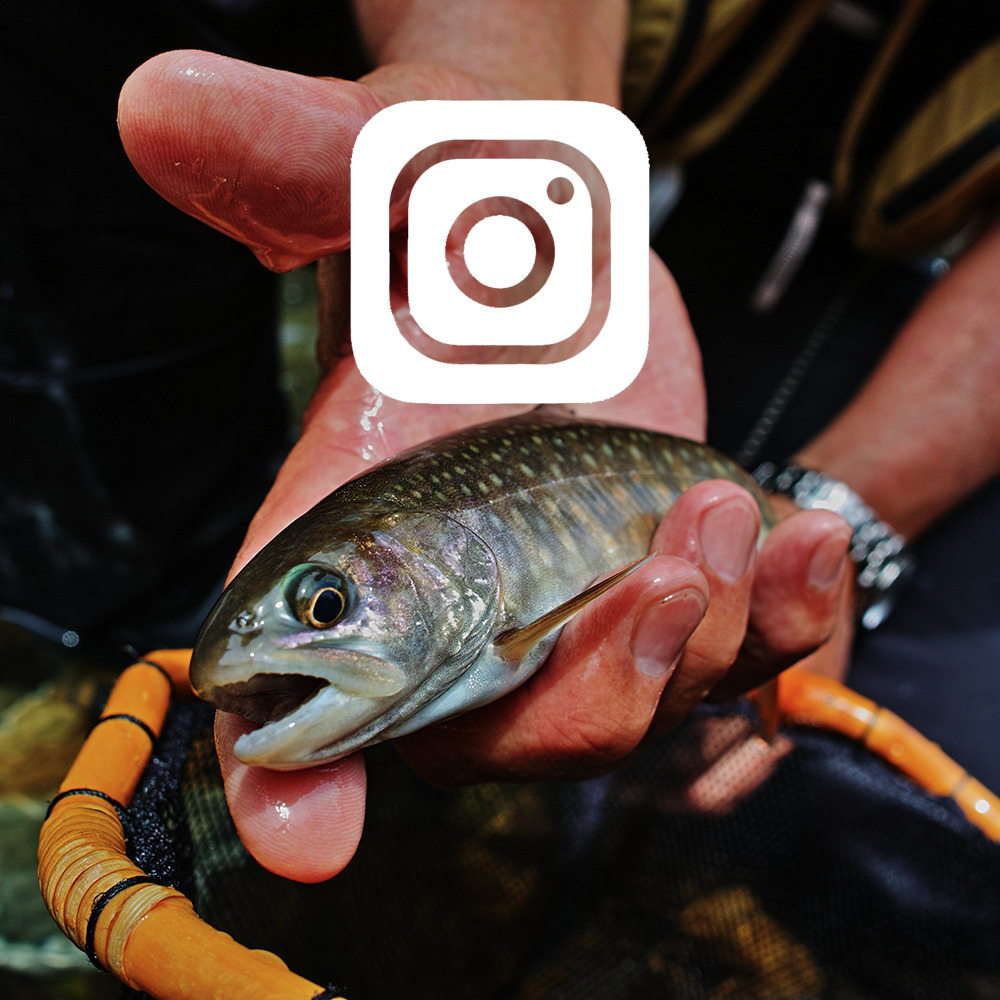 Tenkara on instagram