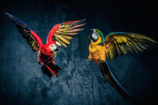 Beautiful Parrots Posters in Canvas