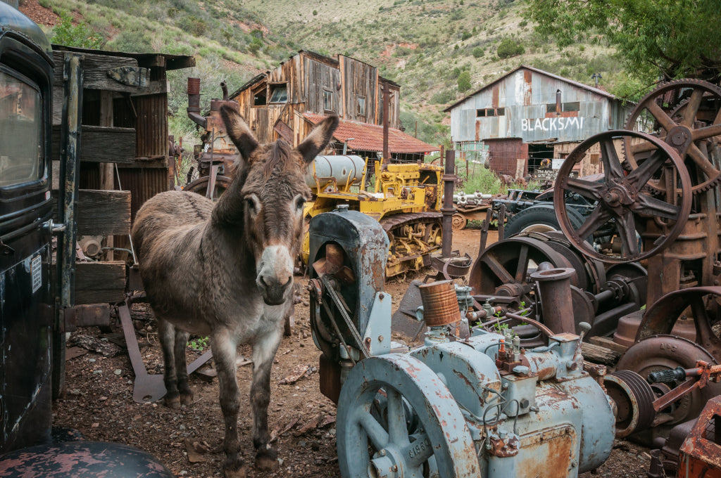 jerome-arizona-ghost-town-advanced-primate-halloween