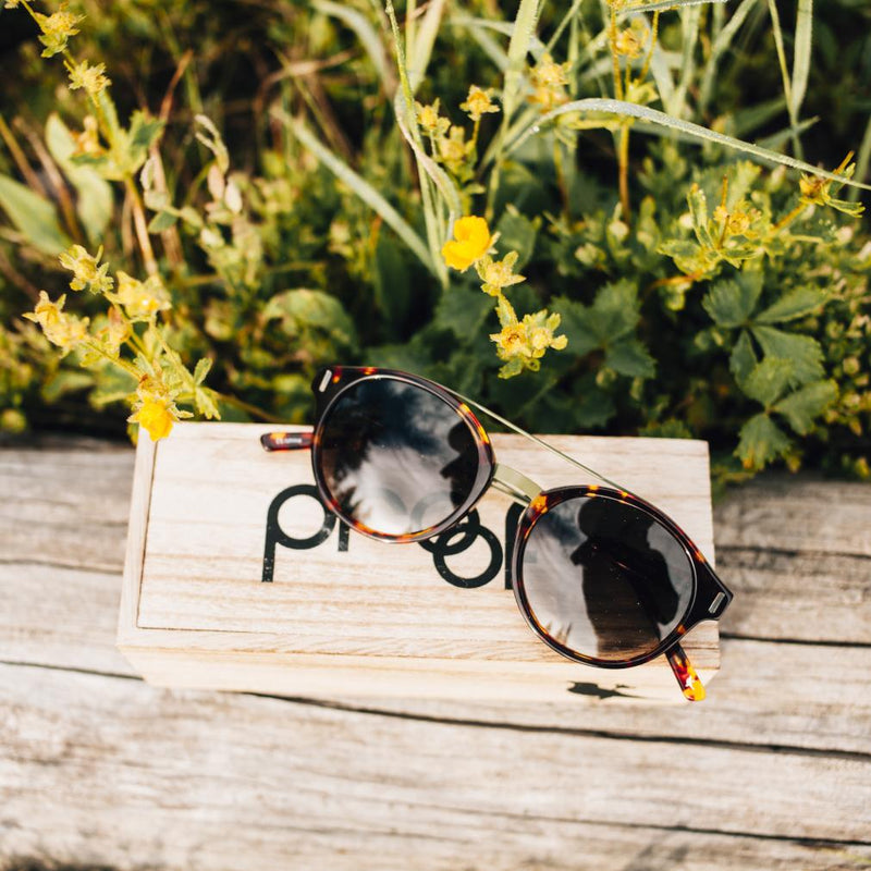 Wilder Eco Matte tortoiseshell sunglasses on Proof box