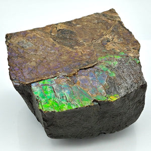 Ammolite Fossil Large - The Jade Store