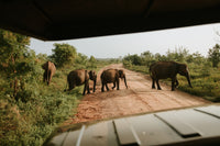 Taking pictures on a Safari in Sri Lanka
