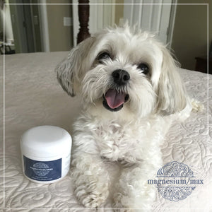 cute puppy loves natural magnesium cream with jojoba oil that stops leg and muscle cramps