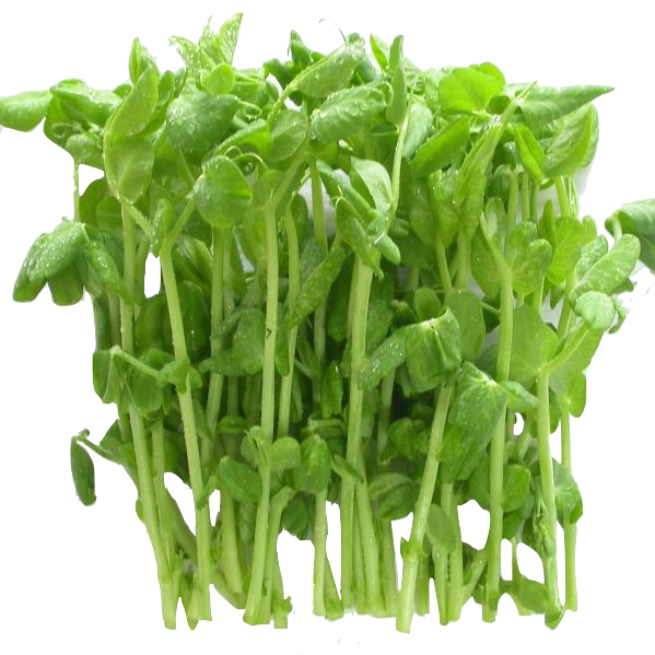 Snowpeas Green Sprout 100 gr