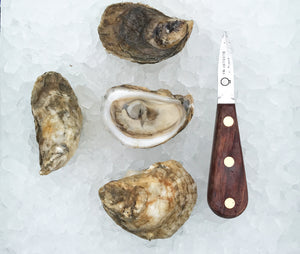 Norumbega Oysters from Damariscotta, Maine
