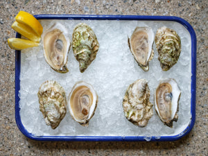 Eider Cove Regular Oysters from Bath, Maine