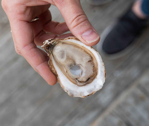 East Cape Oysters from Prince Edward Island, Canada