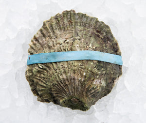 Belon Oysters from Harpswell, Maine