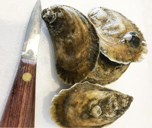 Northern Cross Oysters from Fisherman's Island, VA