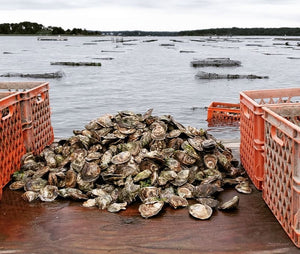 Pleasant Bay Oysters from Orleans, MA
