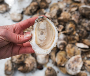 Snow Island Regular Oysters from Quahog Bay, Harpswell, Maine