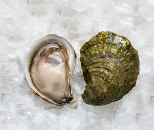 Sand Dune Oysters from Prince Edward Island, Canada