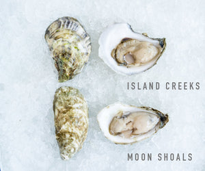 The Oyster Dilemma (50 ICOs and 50 Moon Shoals)