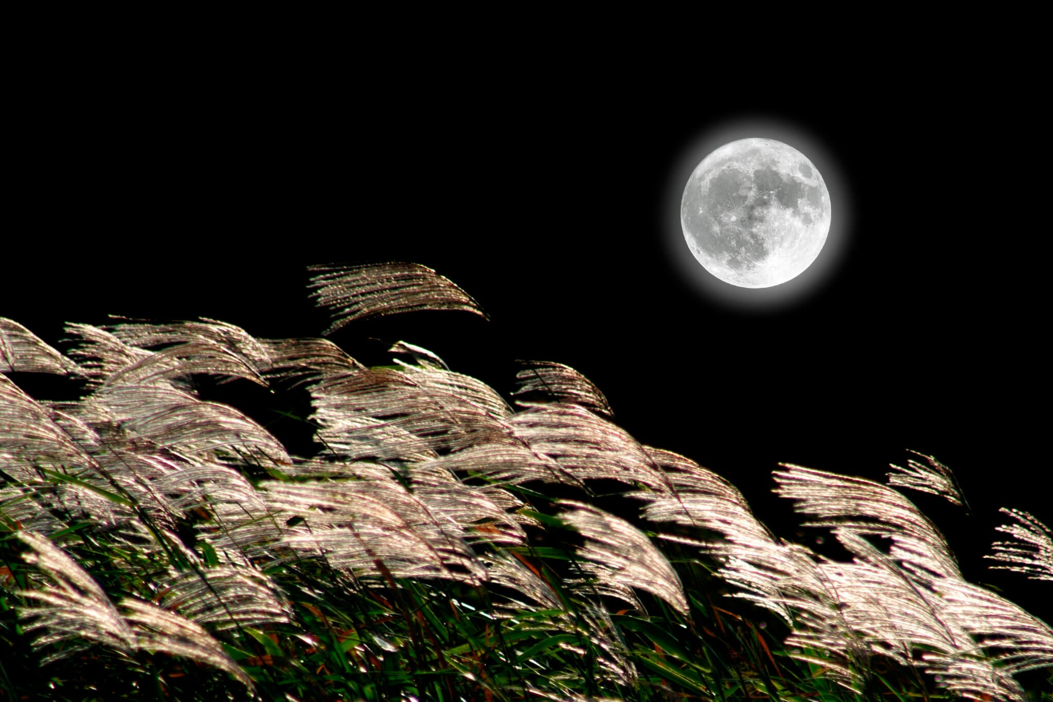 Moon shining over the pampas grass
